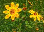 mascal_flower_2.jpg